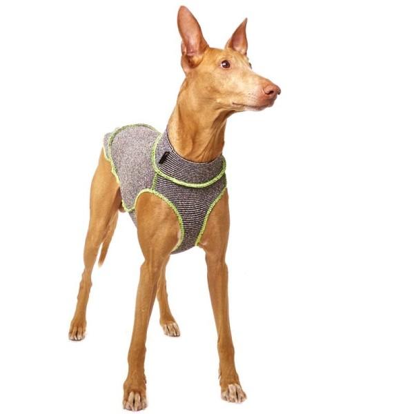 Quinto Forte Sofa Dog Wear