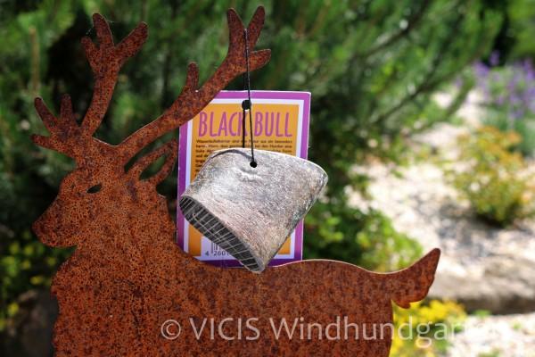 Black Bull Kauhorn